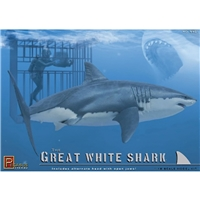 Great White Shark with Diver in Cage